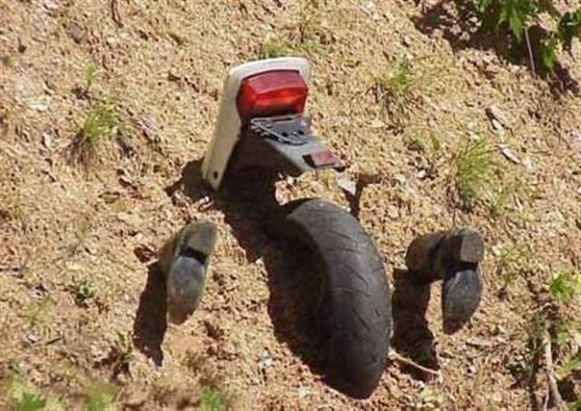 Motorcykelåkare en utrotningshotad art